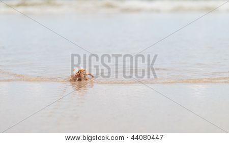 Hermit Crab On The Beach At Phuket Island,thailand