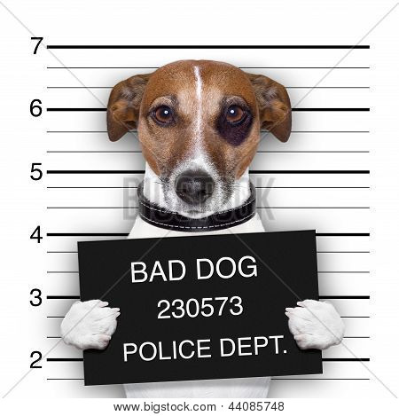 Mugshot Dog