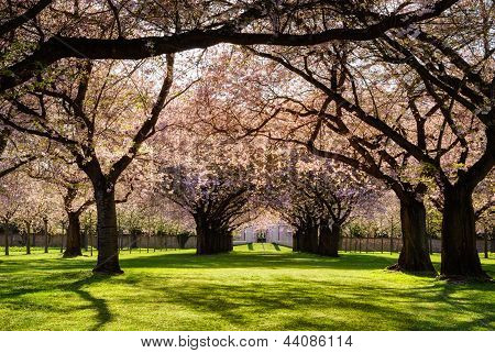 Blossoming Trees In Warm Evening Sunlight