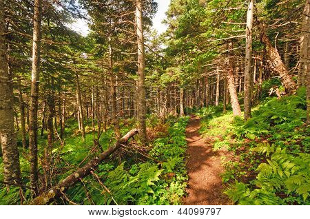 Trail Through A Coastal Forest