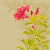 foto of tan lines  - The contour drawing allamanda flower with leaves on toned beige background - JPG
