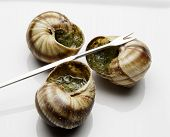 pic of escargot  - Three escargot baked and ready to eat - JPG