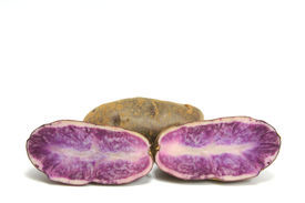 foto of solanum tuberosum  - Blue Potatoes  - JPG