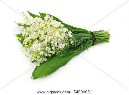 Convallaria majalis  isolated on white background