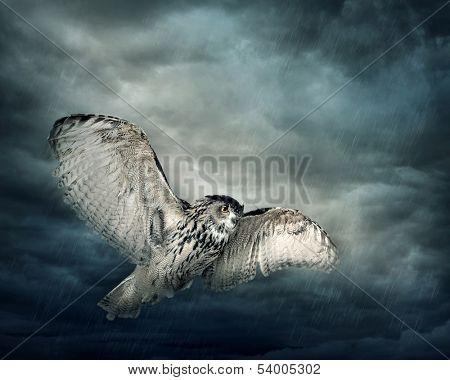 Fliegende Eule Vogel in der Nacht