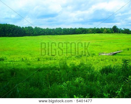 Bright Green Meadows