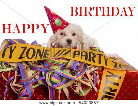 Maltese Dog With Party Hat With Birthday Congratulations