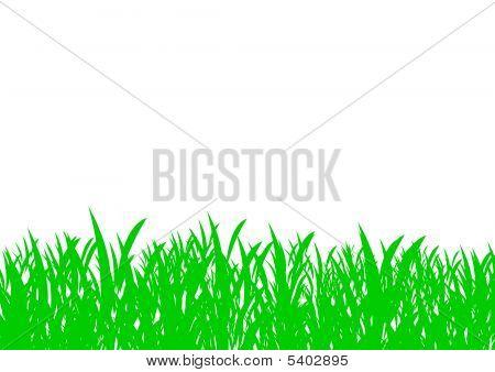 Fondo de hierba aislado
