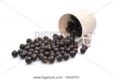 Black Currant And Cup