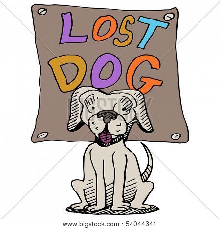 An image of a lost dog.