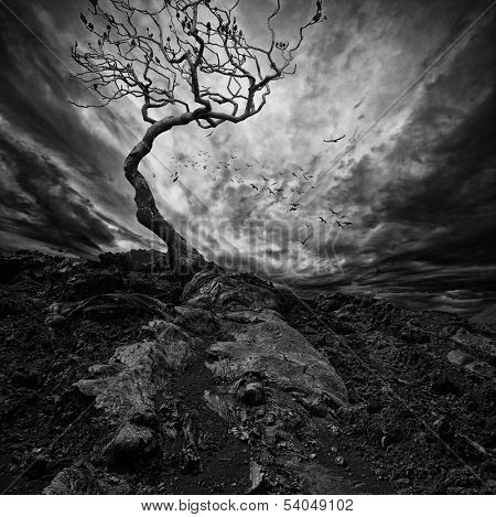 Dramatic sky over old lonely tree