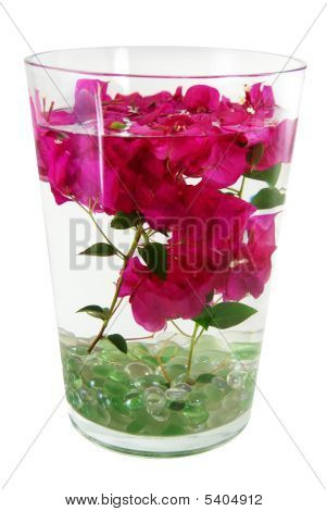 Bougainvillea Stems In Water