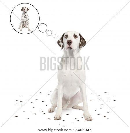 Dalmatian Shedding Its Spots