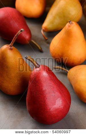 Closeup of Bosc and Red Pears, shallow depth of field with focus on the front piece of fruit.