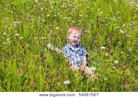 The Boy On The Camomile Field