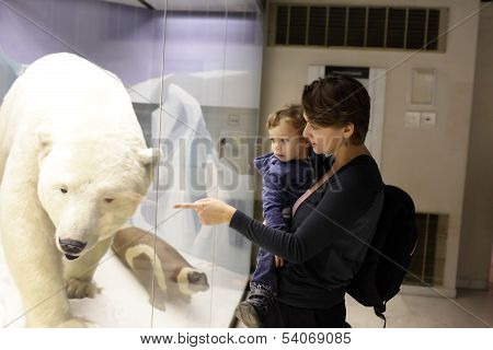 Mother Tells Her Son About Polar Bear