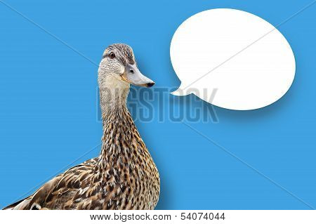 Duck On Blue With Speech Bubble
