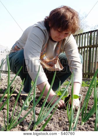 Woman Sows Onion And Cabbage