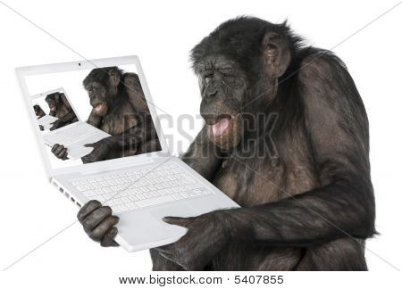 Monkey Looking On A Computer Screen
