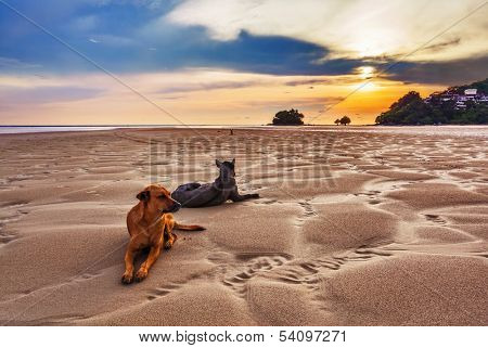 Dogs on the beach under sunset gloomy sky