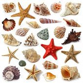 foto of scallops  - Seashell collection isolated on white background - JPG