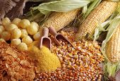 foto of maize  - Still life with maize products - JPG