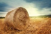 picture of fall-wheat  - Round bales of straw in the meadow - JPG