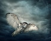 stock photo of witchcraft  - Flying owl bird at night - JPG