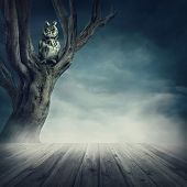 picture of fable  - Owl sitting on the tree at night - JPG