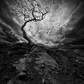 stock photo of sorrow  - Dramatic sky over old lonely tree - JPG