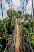 picture of canopy  - Canopy Walkway in Kakum National Park - JPG