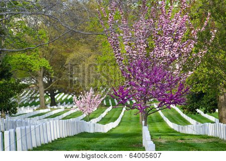 Arlington National Cemetery in Spring - Washington D.C. United States of America