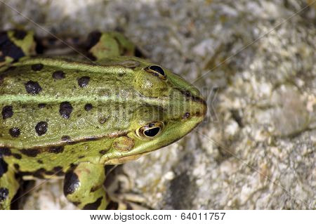 Close up of a tree frog