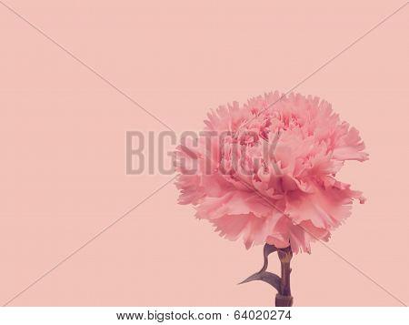 Pink Carnation Retro Style
