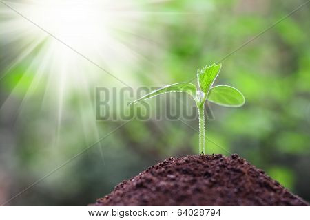 Seedling Closeup With Sunshine