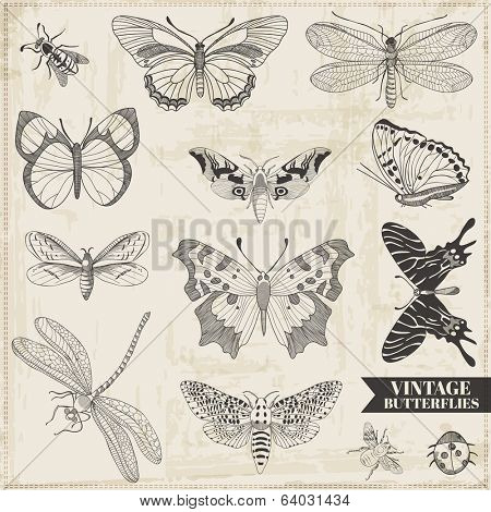 Vector Set: Calligraphic Hand drawn Butterflies - for design and scrapbook - in vector
