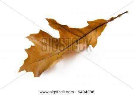 ein braun Herbst leaf