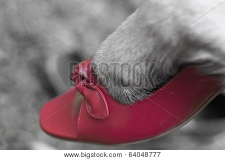 Dog Paw In Shoe