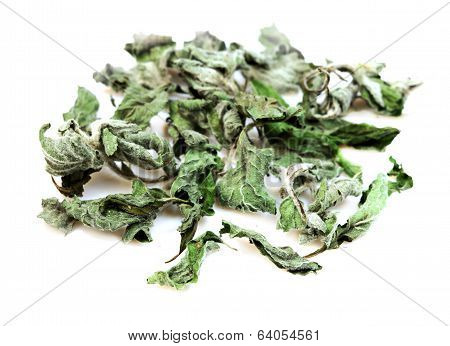 Medical Herbs - Dry Mint