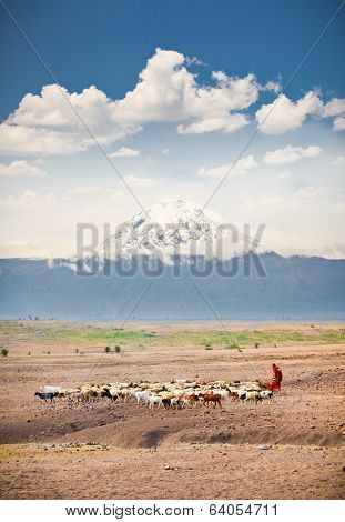 Masai herders  herd  in savannah with a snow covered Mount Kilimanjaro in the background. Tanzania. Africa.