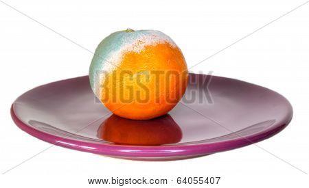 Rotten Orange On The Plate