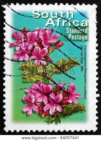 Postage Stamp South Africa 2003 Tree Pelargonium, Flowering Plan