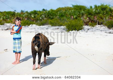 Little boy with a swimming pig of Exuma on a beach in Bahamas