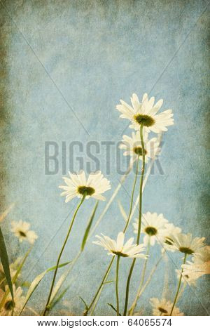 Chamomiles against blue sky. Added paper texture. Shallow depth of field. The focus is on the tallest flower.