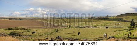 Farmland At Maryhill Washington Panorama