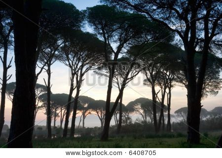 Strophylia Forest At Sunrise