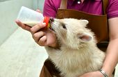 picture of albinos  - zookeeper take care and feeding baby albino raccoon - JPG