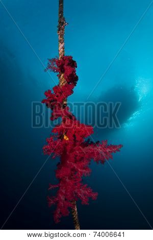 Soft coral and boat