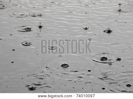 Summer Rainfall With Single Raindrops On Water Surface