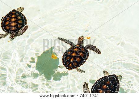 Cute Endangered Baby Turtles